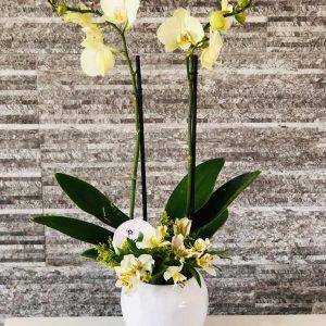 Orquideas Beauty